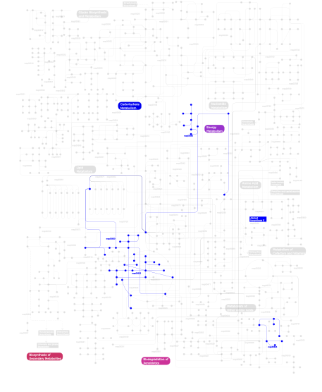 Pathways map